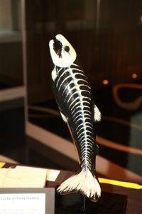 fish bones at museum